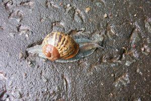 slug-399460_960_720